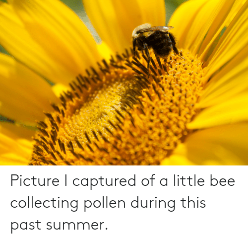 Collecting: Picture I captured of a little bee collecting pollen during this past summer.