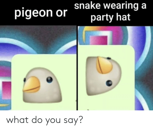 Party, Pigeon, and You: pigeon or hake wearing a  party hat what do you say?