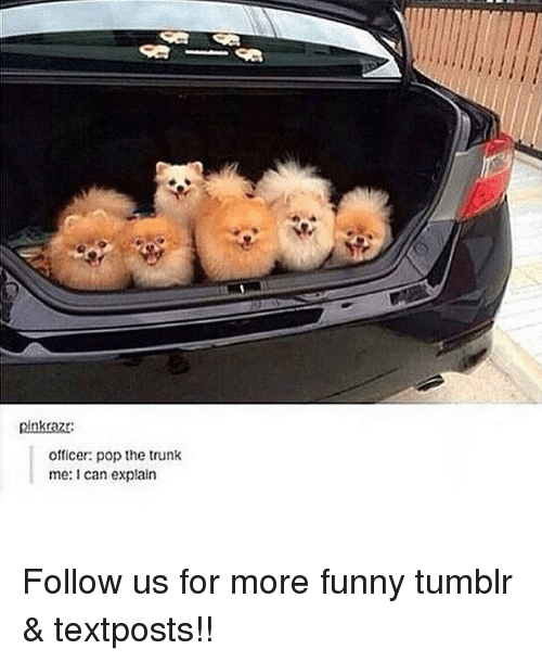 Trunking: pinkraz  Officer: pop the trunk  me: can explain Follow us for more funny tumblr & textposts!!