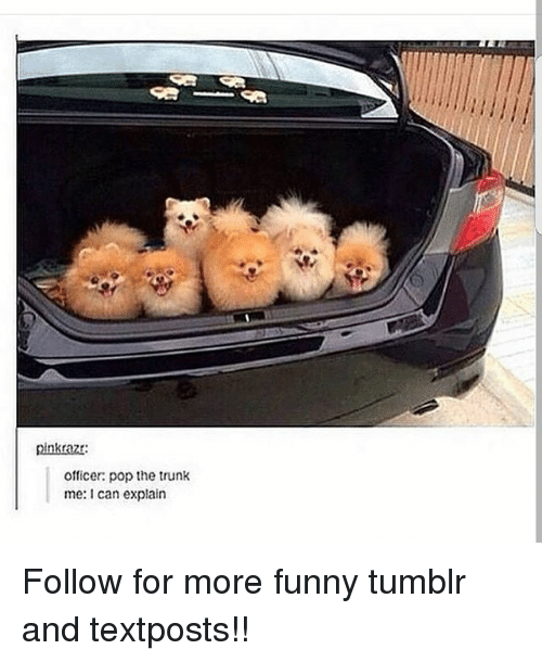 Trunking: pinkrazr  officer: pop the trunk  me: can explain Follow for more funny tumblr and textposts!!