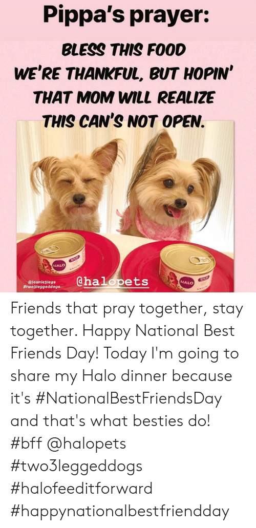 best friends day: Pippa's prayer:  BLESS THIS FOOD  WE'RE THANKFUL, BUT HOPIN'  THAT MOM WILL REALIZE  THIS CAN'S NOT OPEN.  HALO  @halopets  NALO  @jeanie3legs  Friends that pray together, stay together. Happy National Best Friends Day!  Today I'm going to share my Halo dinner because it's #NationalBestFriendsDay and that's what besties do! #bff @halopets #two3leggeddogs #halofeeditforward #happynationalbestfriendday