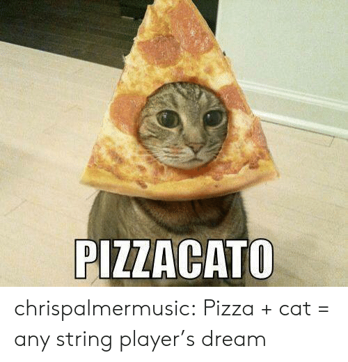 string: PIZZACATO chrispalmermusic:  Pizza + cat = any string player's dream