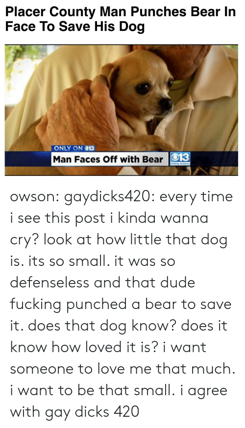 Dicks, Dude, and Fucking: Placer County Man Punches Bear In  Face To Save His Dog   ONLY ON O13  Man Faces Off with Bear O13 owson: gaydicks420:  every time i see this post i kinda wanna cry? look at how little that dog is. its so small. it was so defenseless and that dude fucking punched a bear to save it. does that dog know? does it know how loved it is? i want someone to love me that much. i want to be that small.  i agree with gay dicks 420