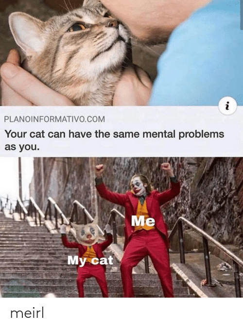 problems: PLANOINFORMATIVO.COM  Your cat can have the same mental problems  as you.  Me  My cat meirl