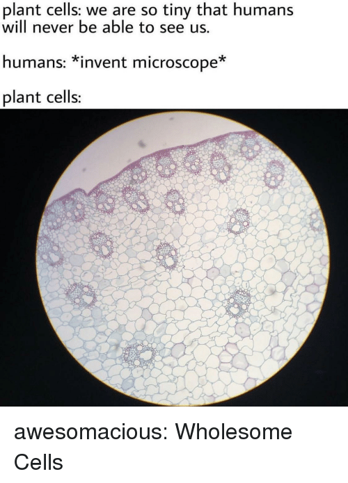 Tumblr, Blog, and Http: plant cells: we are so tiny that humans  will never be able to see us.  humans: *invent microscope  plant cells awesomacious:  Wholesome Cells