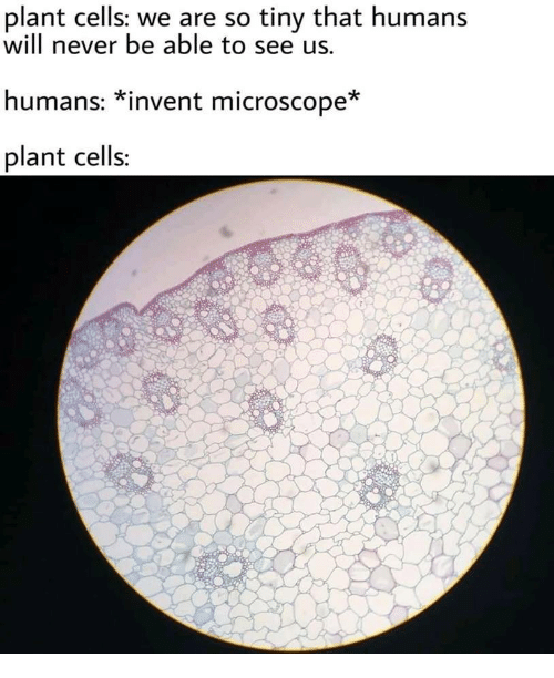 Never, Tiny, and Will: plant cells: we are so tiny that humans  will never be able to see us.  humans: *invent microscope*  plant cells: