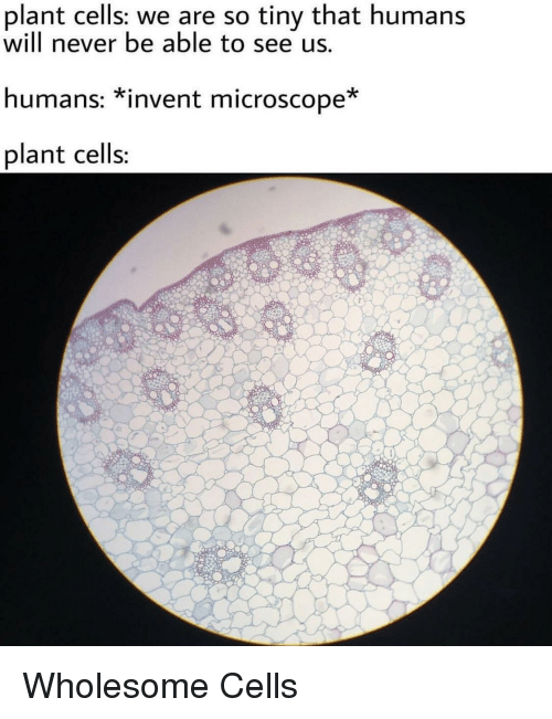 Wholesome, Never, and Tiny: plant cells: we are so tiny that humans  will never be able to see us  humans: *invent microscope  plant cells Wholesome Cells