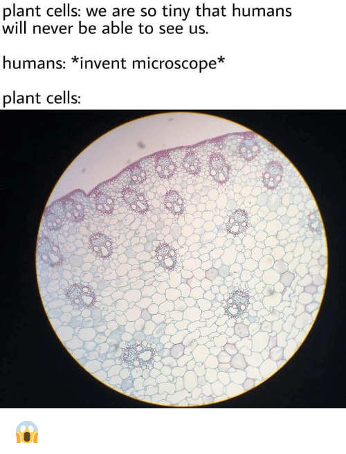 Never, Micro, and Tiny: plant cells: we are so tiny that humans  will never be able to see us.  humans: *invent micro*  plant cells:  scope 😱