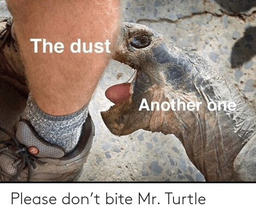 please: Please don't bite Mr. Turtle