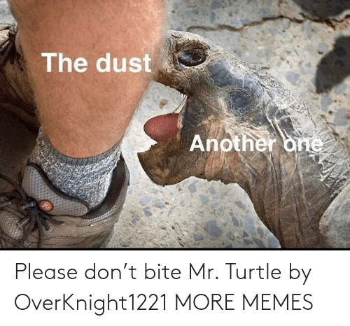 please: Please don't bite Mr. Turtle by OverKnight1221 MORE MEMES
