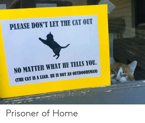 prisoner: PLEASE DON'T LET THE CAT OUT  NO MATTER WHAT HE TELLS YOU  (THE CAT IS A LIAR. HE IS NOT AN OUTDOORSMAN) Prisoner of Home