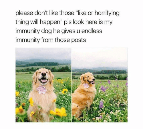 """Happenes: please don't like those """"like or horrifying  thing will happen"""" pls look here is my  immunity dog he gives u endless  immunity from those posts"""