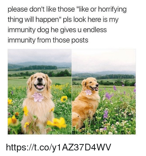 """Happenes: please don't like those """"like or horrifying  thing will happen"""" pls look here is my  immunity dog he gives u endless  immunity from those posts https://t.co/y1AZ37D4WV"""