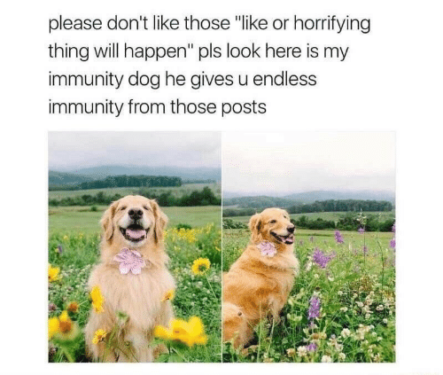 """will happen: please don't like those """"like or horrifying  thing will happen"""" pls look here is my  immunity dog he gives u endless  immunity from those posts"""