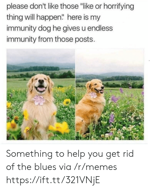 """Memes, Help, and Blues: please don't like those """"like or horrifying  thing will happen"""" here is my  immunity dog he gives u endless  immunity from those posts. Something to help you get rid of the blues via /r/memes https://ift.tt/321VNjE"""