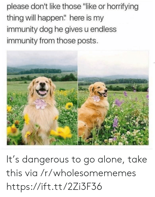 """Being Alone, Dog, and Via: please don't like those """"like or horrifying  thing will happen"""" here is my  immunity dog he gives u endless  immunity from those posts. It's dangerous to go alone, take this via /r/wholesomememes https://ift.tt/2Zi3F36"""