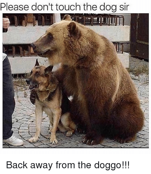 Back Away: Please don't touch the dog sir Back away from the doggo!!!