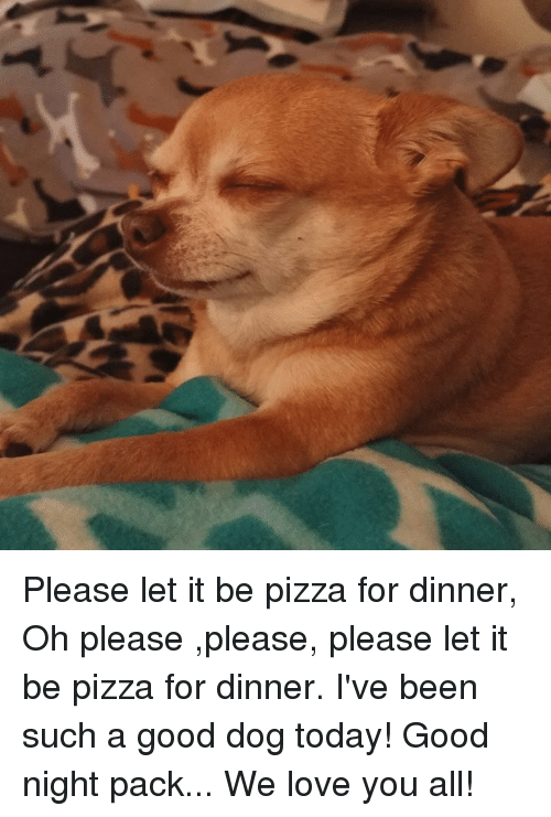please please please: Please let it be pizza for dinner, Oh please ,please, please let it be pizza for dinner. I've been such a good dog today!  Good night pack... We love you all!