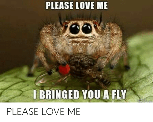 Love, Fly, and You: PLEASE LOVE ME  O BRINGED YOU A FLY  de PLEASE LOVE ME
