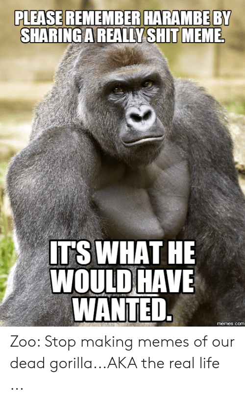 Gorilla Meme: PLEASE REMEMBER HARAMBEBY  SHARING A REALLY SHIT MEMEL  ITS WHAT HE  WOULD HAVE  WANTED  memes.co Zoo: Stop making memes of our dead gorilla...AKA the real life ...