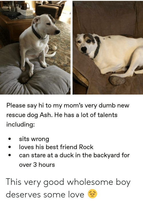 Ash, Best Friend, and Dumb: Please say hi to my mom's very dumb new  rescue dog Ash. He has a lot of talents  including:  sits wrong  loves his best friend Rock  stare at a duck in the backyard for  over 3 hours This very good wholesome boy deserves some love 😔