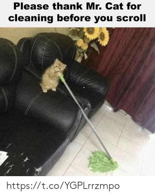 Memes, 🤖, and Cat: Please thank Mr. Cat for  cleaning before you scroll https://t.co/YGPLrrzmpo