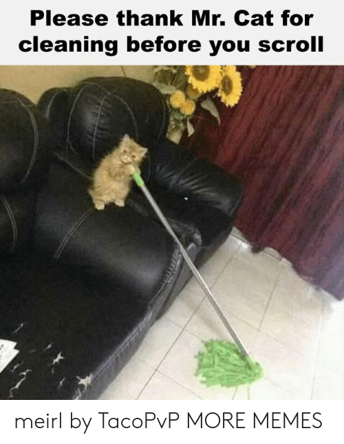 Dank, Memes, and Target: Please thank Mr. Cat for  cleaning before you scroll meirl by TacoPvP MORE MEMES