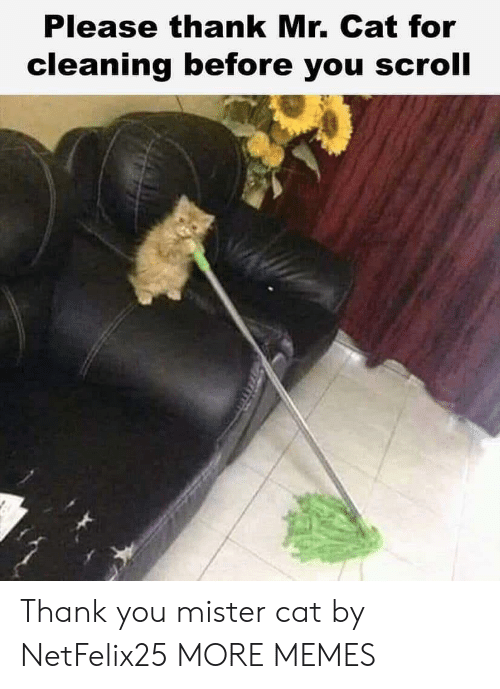 Dank, Memes, and Target: Please thank Mr. Cat for  cleaning before you scroll Thank you mister cat by NetFelix25 MORE MEMES
