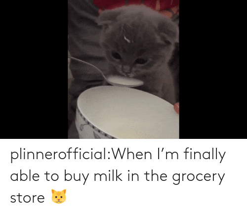 store: plinnerofficial:When I'm finally able to buy milk in the grocery store 🐱