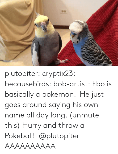 Aaaaaaaaaa: plutopiter:  cryptix23:  becausebirds:  bob-artist:  Ebo is basically a pokemon.  He just goes around saying his own name all day long. (unmute this)  Hurry and throw a Pokéball!   @plutopiter  AAAAAAAAAA