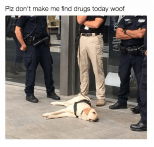 Woofe: Plz don't make me find drugs today woof
