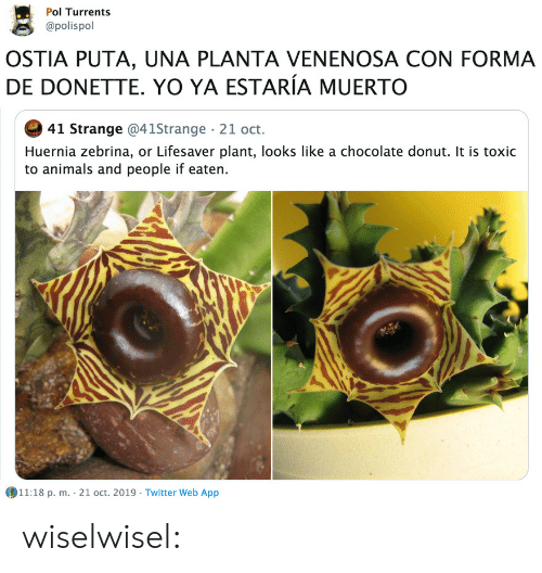 pol: Pol Turrents  @polispol  OSTIA PUTA, UNA PLANTA VENENOSA CON FORMA  DE DONETTE. YO YA ESTARÍA MUERTO  41 Strange @41Strange 21 oct.  Huernia zebrina, or Lifesaver plant, looks like a chocolate donut. It is toxic  to animals and people if eaten.  11:18 p. m. 21 oct. 2019 Twitter Web App wiselwisel: