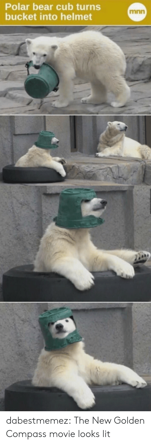 Lit, Tumblr, and Bear: Polar bear cub turns  bucket into helmet  mnn dabestmemez: The New Golden Compass movie looks lit