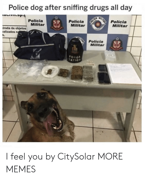 Policia: Police dog after sniffing drugs all day  MILTAR  Polícia  Militar  Polícia  Militar  Polícia  Militar  S P  POLICIA  rada de objetos  alizados n  h.  Polícia  Militar  SP  FORCA  TATICA  COMETE  An I feel you by CitySolar MORE MEMES