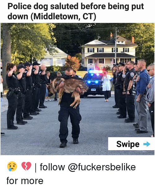 dogged: Police dog saluted before being put  down (Middletown, CT)  Swipe . 😢 💔   follow @fuckersbelike for more