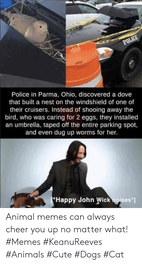 the bird: POLICE  Police in Parma, Ohio, discovered a dove  that built a nest on the windshield of one of  their cruisers. Instead of shooing away the  bird, who was caring for 2 eggs, they installed  an umbrella, taped off the entire parking spot,  and even dug up worms for her.  Happy John Wick noises ] Animal memes can always cheer you up no matter what! #Memes #KeanuReeves #Animals #Cute #Dogs #Cat
