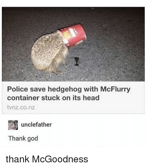 Hedgehoging: Police save hedgehog with McFlurry  container stuck on its head  tvnz.co.nz  unclefather  Thank god thank McGoodness