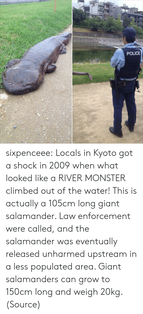 Upstream: POLICE sixpenceee:   Locals  in Kyoto got a shock in 2009 when what looked like a RIVER MONSTER  climbed out of the water! This is actually a 105cm long giant  salamander. Law enforcement were called, and the salamander was  eventually released unharmed upstream in a less populated area. Giant salamanders can grow to 150cm long and weigh 20kg.  (Source)