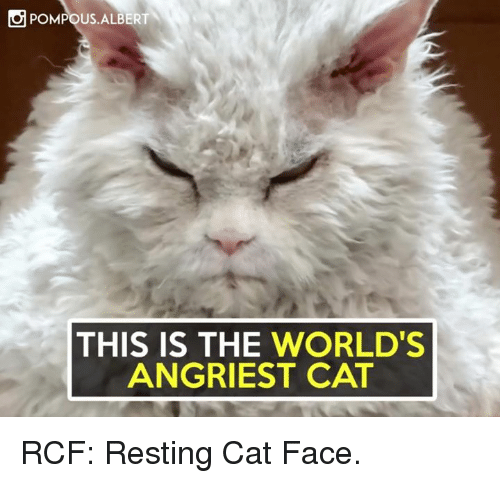 Angriest: POMPOUS ALBERT  THIS IS THE WORLD'S  ANGRIEST CAT RCF: Resting Cat Face.