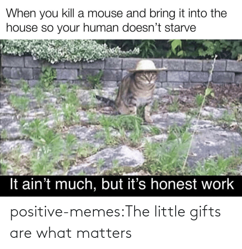 Matters: positive-memes:The little gifts are what matters