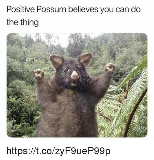 Memes, Possum, and 🤖: Positive Possum believes you can do  the thing https://t.co/zyF9ueP99p