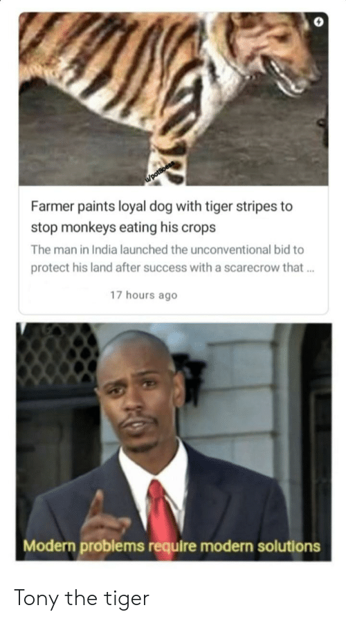 Reddit, India, and Tiger: /potBoess  Farmer paints loyal dog with tiger stripes to  stop monkeys eating his crops  The man in India launched the unconventional bid to  protect his land after success with a scarecrow that..  17 hours ago  Modern problems require modern solutions Tony the tiger