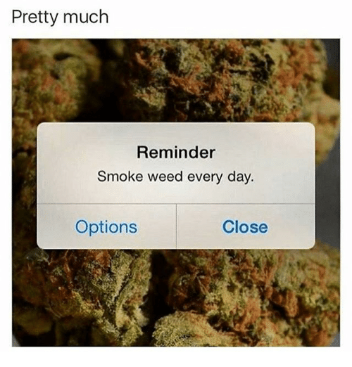 smoke weed every day: Pretty much  Reminder  Smoke weed every day.  Options  Close
