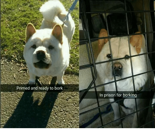 Børk: Primed and ready to bork  in prison for borking