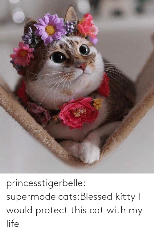 my life: princesstigerbelle:  supermodelcats:Blessed kitty I would protect this cat with my life