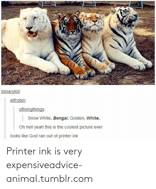 Very Expensive: Printer ink is very expensiveadvice-animal.tumblr.com