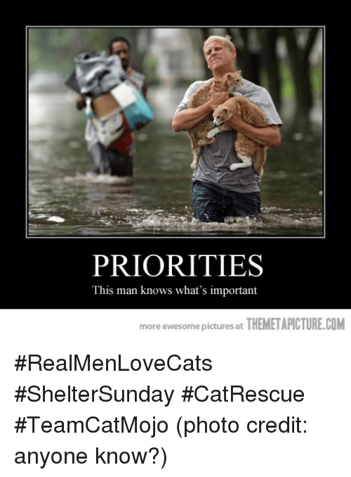 Themetapictures: PRIORITIES  This man knows what's important  more awesome picturesat  THEMETAPICTURE.COM #RealMenLoveCats #ShelterSunday #CatRescue #TeamCatMojo  (photo credit: anyone know?)