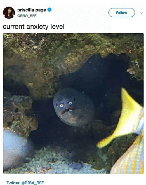Anxiety Level: priscilla page  @BBW BFF  Follow  current anxiety level  Twitter: @BB_BFF