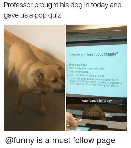 Dogs, Funny, and Memes: Professor brought his dog in today and  gave us a pop quiz  How do you feel about Maggie?  A Shes a good dog  8. She's a very good dog yes she is  C Shes the best dog  D She is the Platonic ideal of a dog.  E. Idon lke dogs but despite my generalized  disike of al things canine, I make an exception  for Magsie, because that's how great she is  Attendance for today @funny is a must follow page