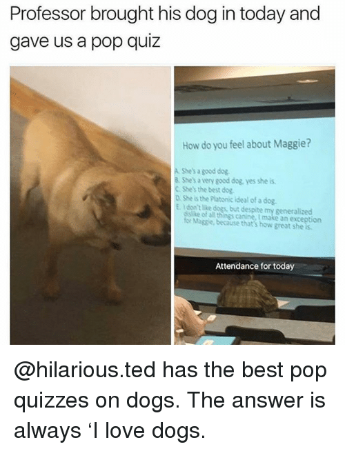 Dogs, Love, and Memes: Professor brought his dog in today and  gave us a pop quiz  How do you feel about Maggie?  A She's a good dog  8 Shes a very good dog yes she is  C Shes the best dog.  D. She s the Platonic ideal of a dog.  E Idon't like dogs, but despite my generalized  ssike ofall things canine. I make an exception  for Magsie, because that's how great she is  Attendance for today @hilarious.ted has the best pop quizzes on dogs. The answer is always 'I love dogs.